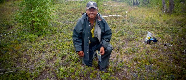 Boniface Robillard of Black Lake picking berries<br>Photo courtesy of CanNorth