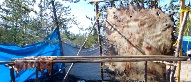 Cultural Camp near the community of Fond du Lac in 2011<br>Photo courtesy of CanNorth