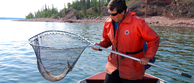 Dennis Larocque of Camsell Portage collecting a fish sample<br>Photo courtesy of CanNorth